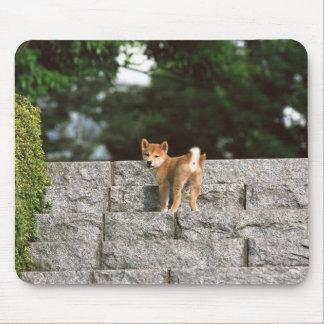 日本のな超小型のShiba 4 マウスパッド