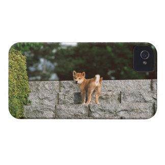 日本のな超小型のShiba 4 Case-Mate iPhone 4 ケース