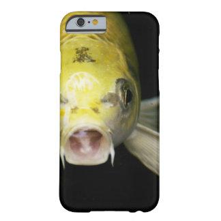 日本のコイの魚 BARELY THERE iPhone 6 ケース