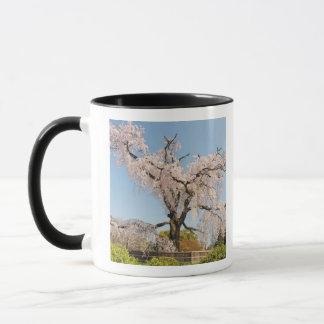 日本、京都。 青空の下の泣く桜 マグカップ