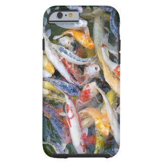 日本、東京、Nahaufnahmeschwimmenfisch ケース