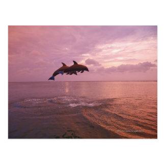 日没で跳んでいるBottlenosedのイルカ ポストカード