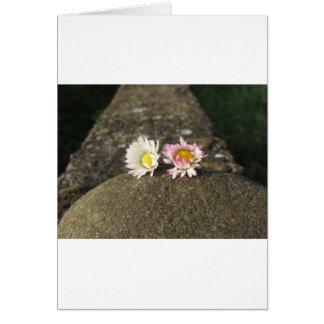 日没に石にある2白いデイジー カード