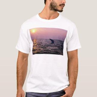 日没に表示置いているザトウクジラ帽子に Tシャツ