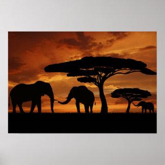 日没のアフリカゾウのシルエット ポスター