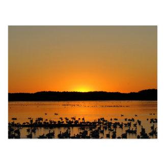 日没のハクガン ポストカード