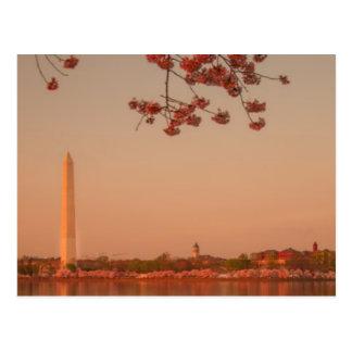日没のワシントン記念塔の桜 ポストカード