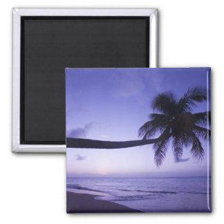 日没の単独ヤシの木、ココナッツ果樹園のビーチ3 マグネット