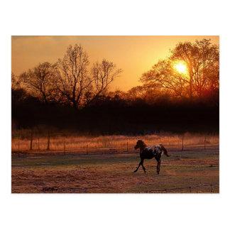 日没の小さい種馬 ポストカード