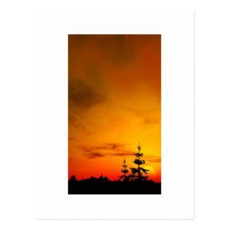 日没の松の木 ポストカード