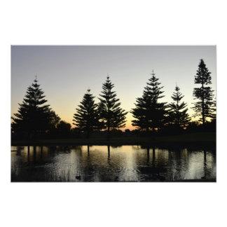 日没の池及びマツ フォトプリント