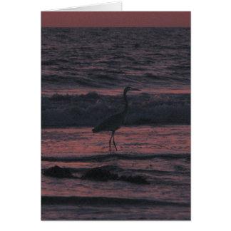 日没の海鳥 カード