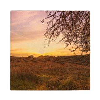 日没の秋のラベンダー分野 ウッドコースター