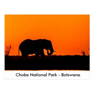 日没の象Bullのシルエット ポストカード
