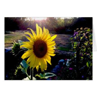 日没の黄色いヒマワリ --- カード