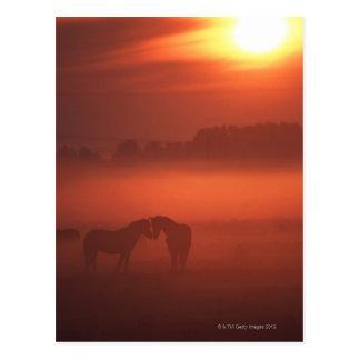 日没の2頭の馬 ポストカード