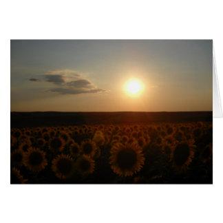 日没 カード