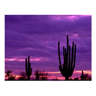 日没、スコッツデール、アリゾナ ポストカード