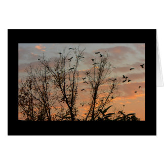 日没-黒い背景の黒い鳥 カード