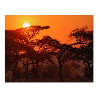 日没、Tarangireでシルエットを描かれるアカシアの森林 ポストカード