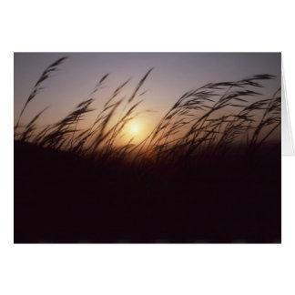 日没grasses.jpg カード