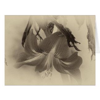 旧式なアマリリスの花 カード