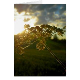 早朝の花 カード