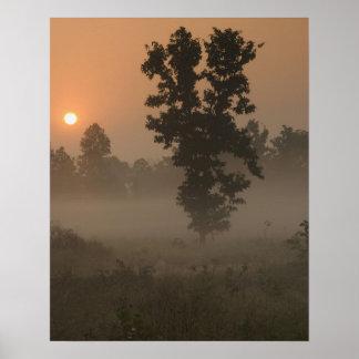 早朝、朝日および地上霧 ポスター