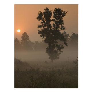 早朝、朝日および地上霧 ポストカード