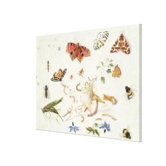 昆虫および花の勉強 キャンバスプリント