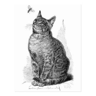 昆虫を見ている猫のヴィンテージの絵 はがき
