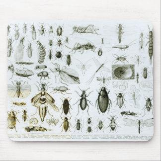 昆虫学の昆虫 マウスパッド