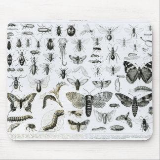 昆虫学 マウスパッド