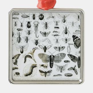 昆虫学 メタルオーナメント