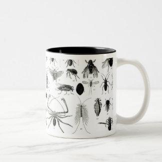 昆虫学、多足類および蜘蛛形綱 ツートーンマグカップ