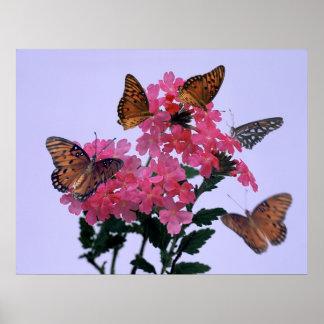 (昆虫)オオカバマダラ、モナークおよびピンクのPenta ポスター