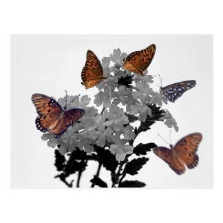 (昆虫)オオカバマダラ、モナークおよびPenta ポストカード