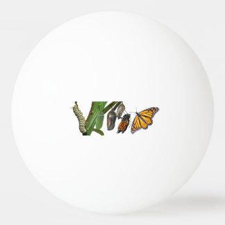 (昆虫)オオカバマダラ、モナークのライフサイクル 卓球ボール