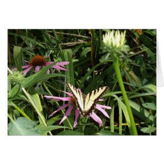 (昆虫)オオカバマダラ、モナークの休息 カード