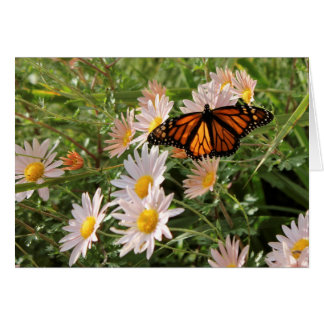 (昆虫)オオカバマダラ、モナークの挨拶状 カード