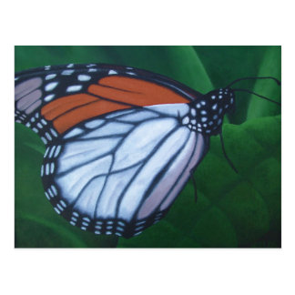 (昆虫)オオカバマダラ、モナークの郵便はがき ポストカード