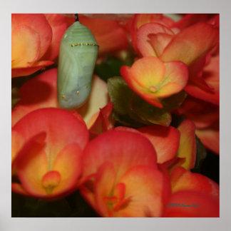 (昆虫)オオカバマダラ、モナークのChrysalis ポスター