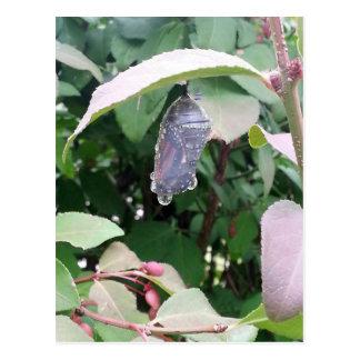(昆虫)オオカバマダラ、モナークのChrysalis ポストカード