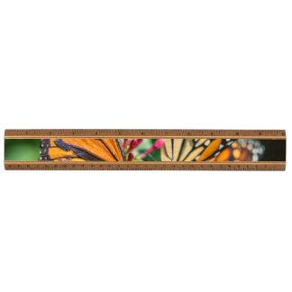(昆虫)オオカバマダラ、モナークのDanaus Plexippus 定規