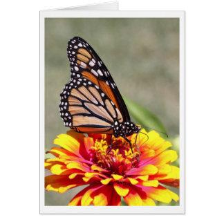 (昆虫)オオカバマダラ、モナーク カード