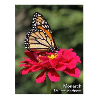 (昆虫)オオカバマダラ、モナーク ポストカード