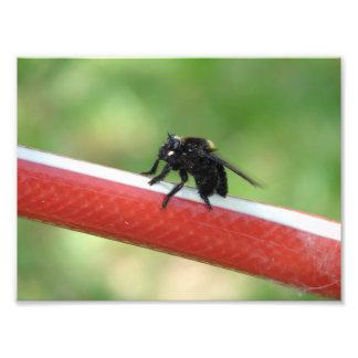 昆虫 フォトプリント