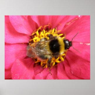 《昆虫》マルハナバチのプリント ポスター