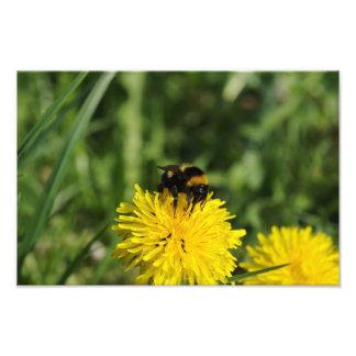 《昆虫》マルハナバチの写真の拡大 フォトプリント