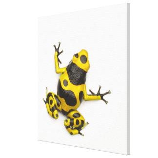 《昆虫》マルハナバチの毒投げ矢のカエル キャンバスプリント